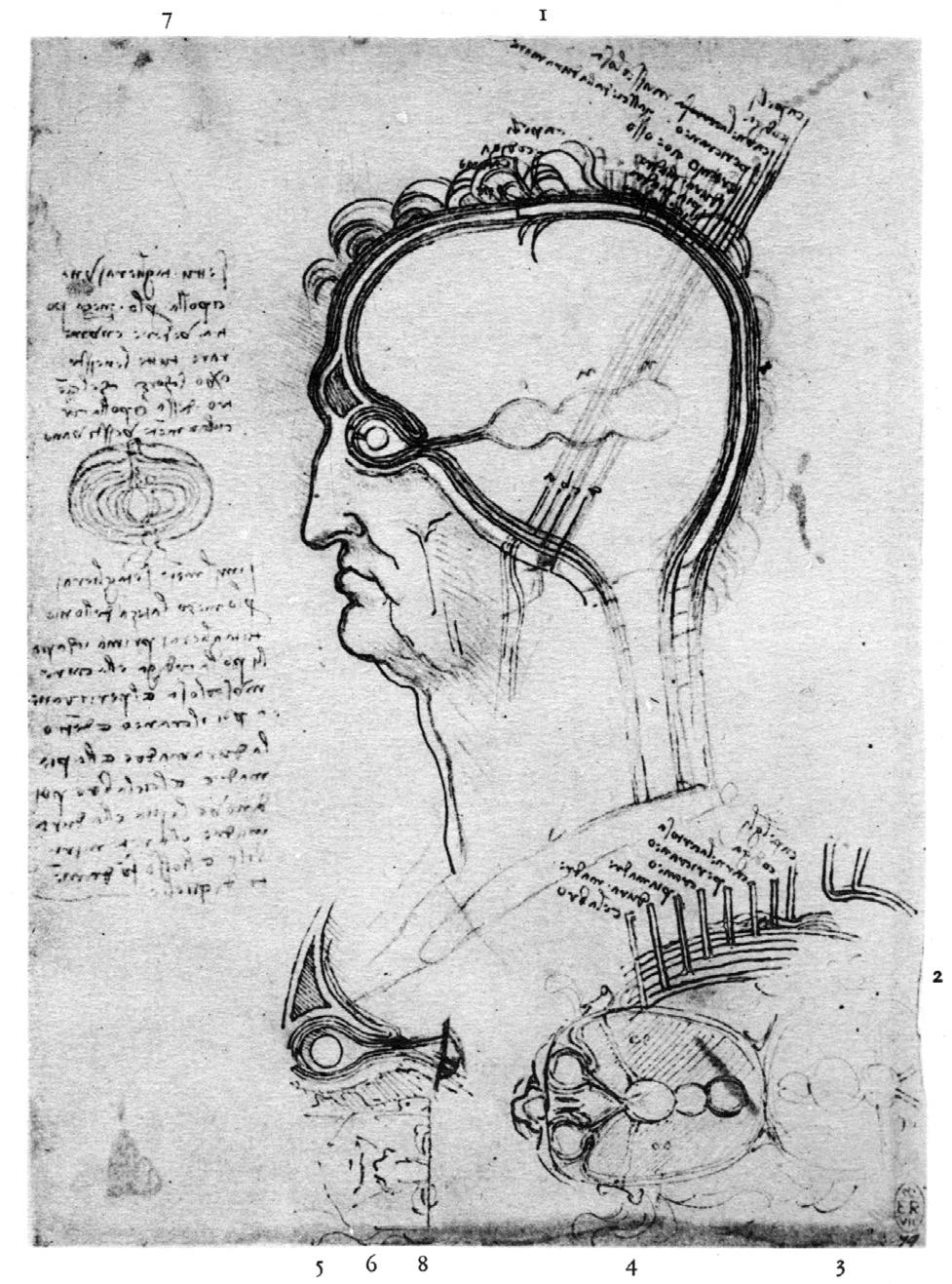 Kunst und Wissenschaft: Leonardo zwischen »automimesis« und ...
